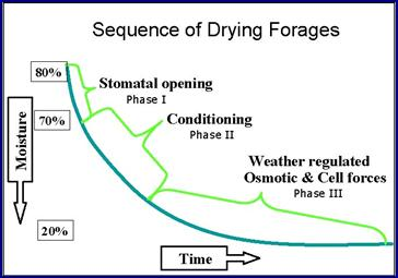 Sequence of Drying Forages